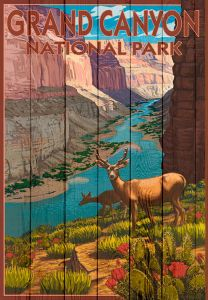 Grand Canyon Deer